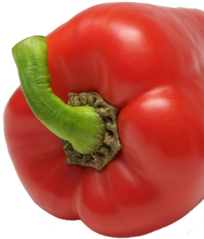 pepper_cropped_290x340